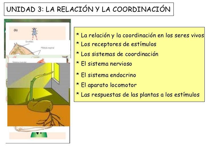 * La relación y la coordinación en los seres vivos * Los receptores de estímulos * Los sistemas de coordinación * El siste...