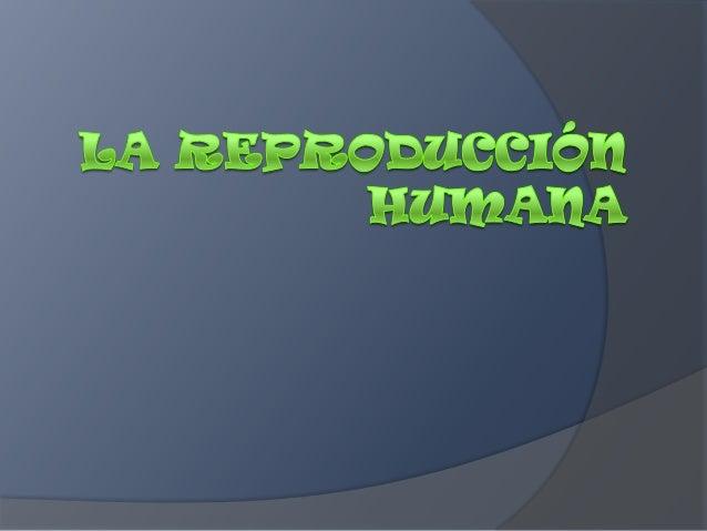 LA REPRODUCCIÓN HUMANA- javier