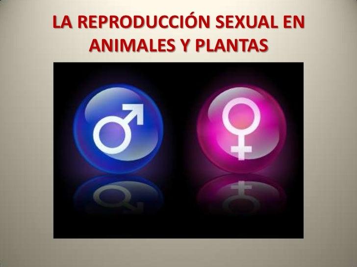La reproducción sexual en animales y plantas