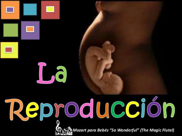 "Mozart para Bebés ""So Wonderful"" (The Magic Flutel)"