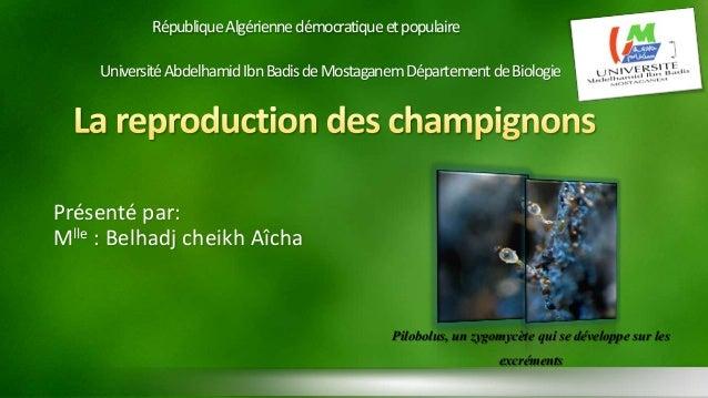 République Algérienne démocratique et populaire  Université Abdelhamid Ibn Badisde MostaganemDépartement de Biologie  Prés...