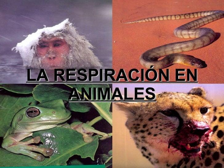 La respiración en animales