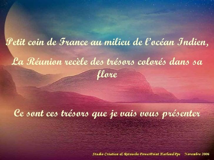 Petit coin de France au milieu de l'océan Indien, La Réunion recèle des trésors colorés dans sa flore Ce sont ces trésors ...