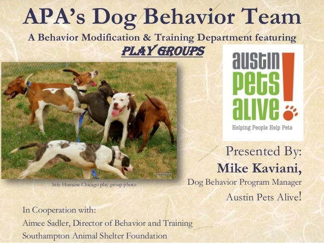 APA's Dog Behavior Team A Behavior Modification & Training Department featuring Play Groups Presented By: Mike Kaviani, Do...