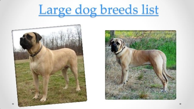 Dog Breeds List Large Dog Breeds List