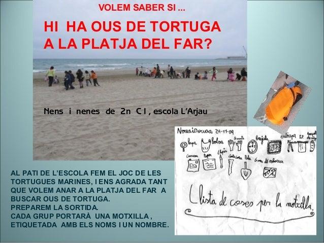 AL PATI DE L'ESCOLA FEM EL JOC DE LES TORTUGUES MARINES, I ENS AGRADA TANT QUE VOLEM ANAR A LA PLATJA DEL FAR A BUSCAR OUS...