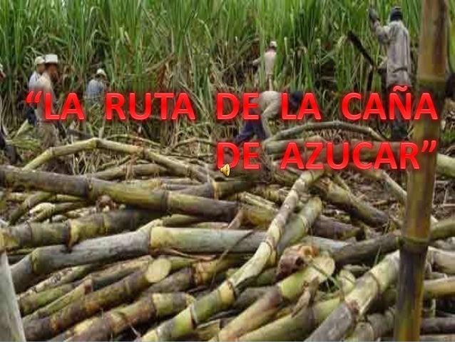 Por mucho tiempo la caña de azúcar se constituyó en la base de la economía de nuestro pueblo, unida al maíz, el plátano, a...