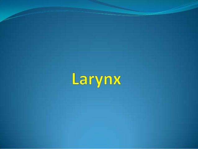 Larynx 1