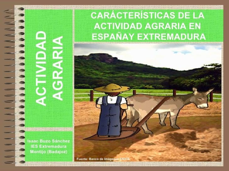 ACTIVIDAD AGRARIA Isaac Buzo Sánchez IES Extremadura Montijo (Badajoz) CARÁCTERÍSTICAS DE LA  ACTIVIDAD AGRARIA EN  ESPAÑA...
