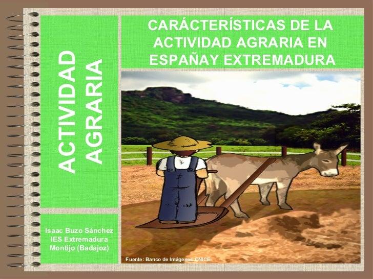 ACTIVIDAD AGRARIA Isaac Buzo Sánchez IES Extremadura Montijo (Badajoz) http://personales.ya.com/isaacbuzo CARACTERÍSTICAS ...