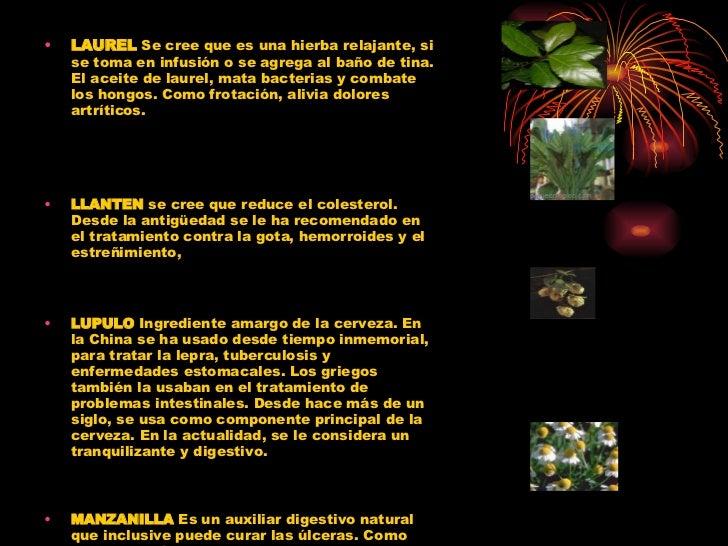 Baño De Tina Con Eucalipto:Las Maravillas De Las Hierbas