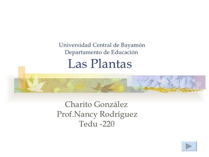 Universidad Central de Bayamón Departamento de Educación   Las Plantas  Charito GonzálezProf.Nancy Rodríguez      Tedu -220