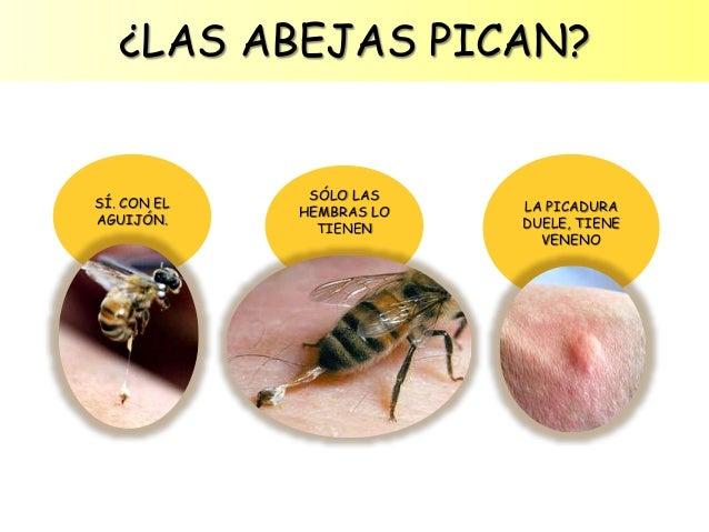 Image: Galería: Ranking de Insectos - Listas en. Galería