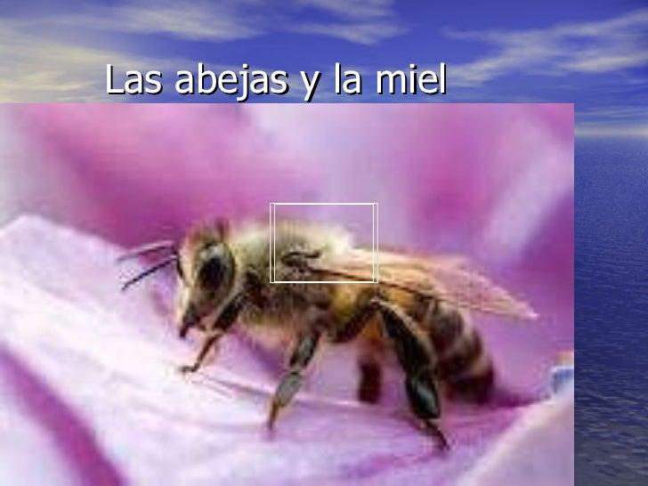 Las abejas y la miel, Sergio