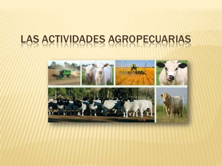 LAS ACTIVIDADES AGROPECUARIAS