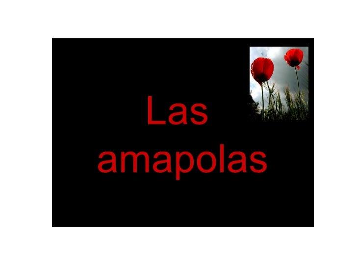 Las  amapolas