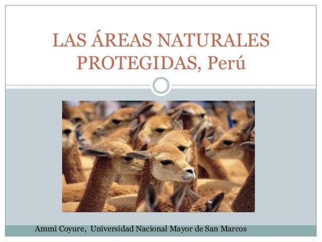 LAS ÁREAS NATURALES PROTEGIDAS, Perú Ammi Coyure, Universidad Nacional Mayor de San Marcos