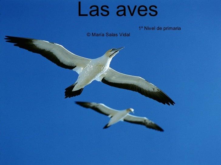 Las aves   1º Nivel de primaria    © María Salas Vidal