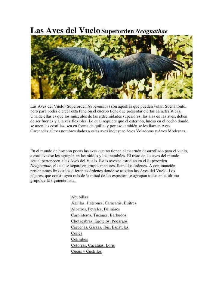 Las Aves del Vuelo Superorden Neognathae <br />Las Aves del Vuelo (Superorden Neognathae) son aquellas que pueden volar. S...