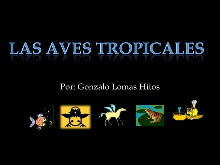 Por: Gonzalo Lomas Hitos