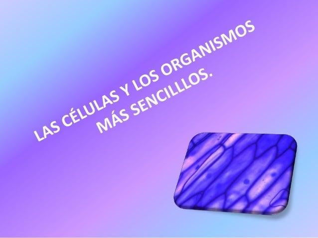 Organismos. Unicelulares     una sola célula,  microscópicos y cumplen las tres funciones  vitales. Pluricelulares    do...