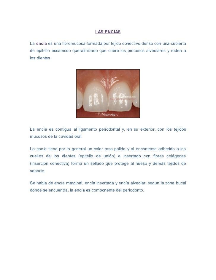 LAS ENCIASLa encía es una fibromucosa formada por tejido conectivo denso con una cubiertade epitelio escamoso queratinizad...