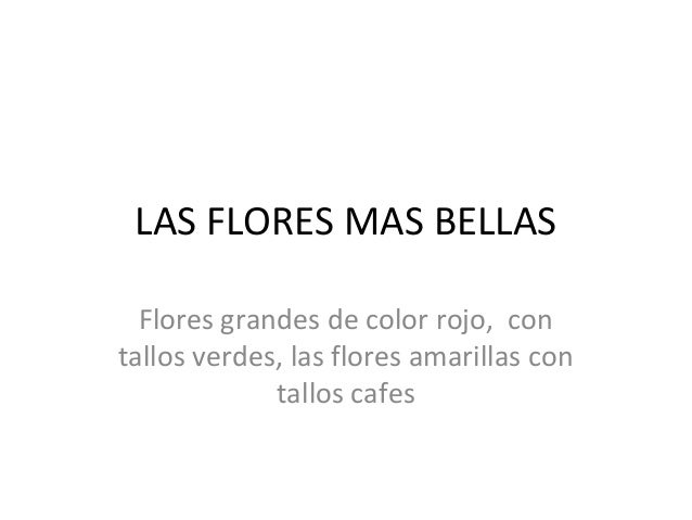 LAS FLORES MAS BELLAS Flores grandes de color rojo, con tallos verdes, las flores amarillas con tallos cafes