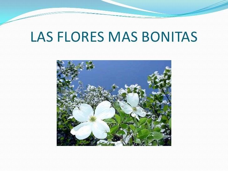 LAS FLORES MAS BONITAS