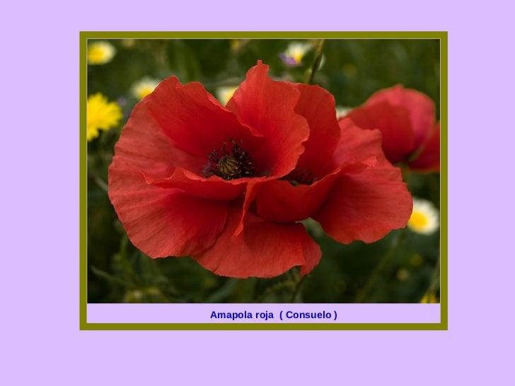 Las flores y el significado de sus nombres 1 - Significado de las rosas rosas ...