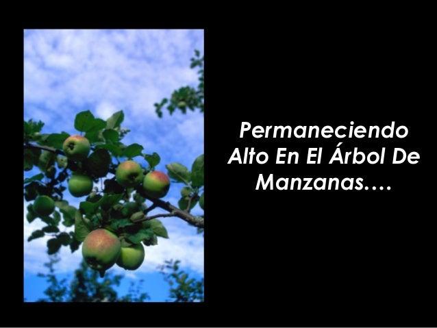 PermaneciendoAlto En El Árbol De   Manzanas.…