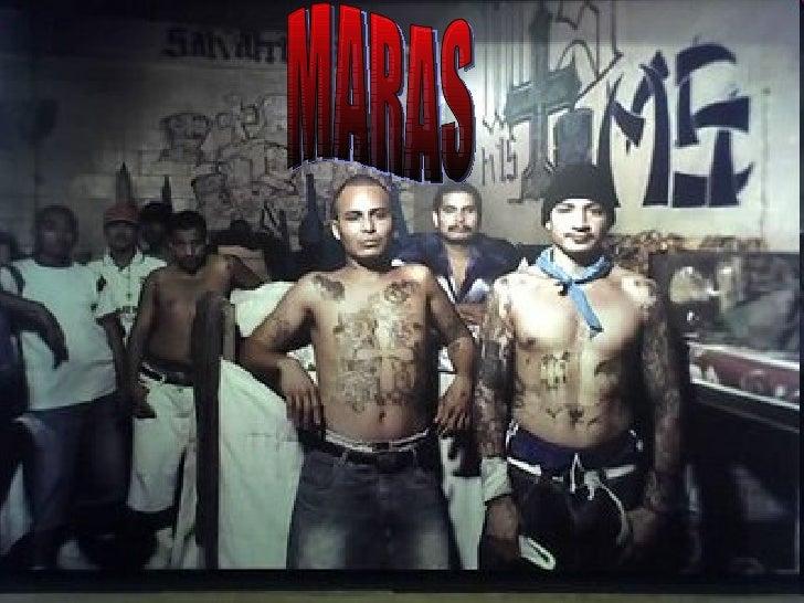 <ul>MARAS </ul>