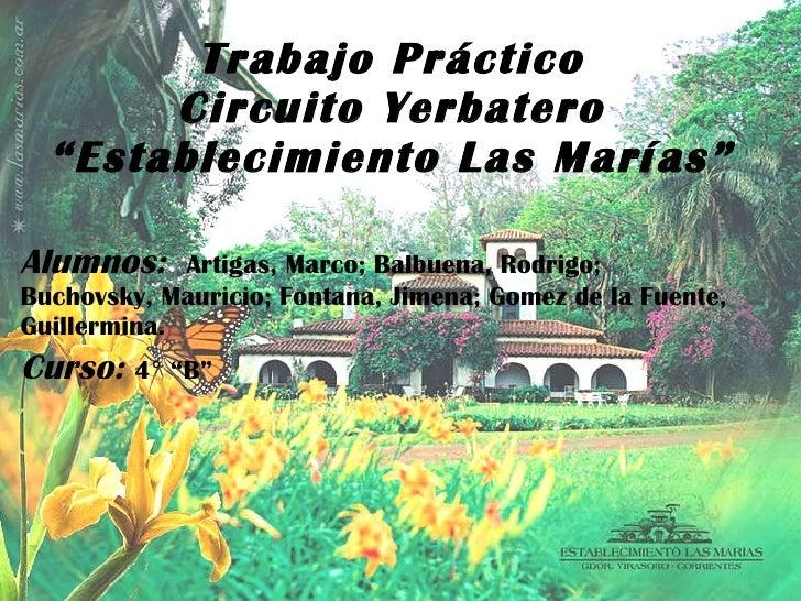 Circuito Yerbatero : Las marias