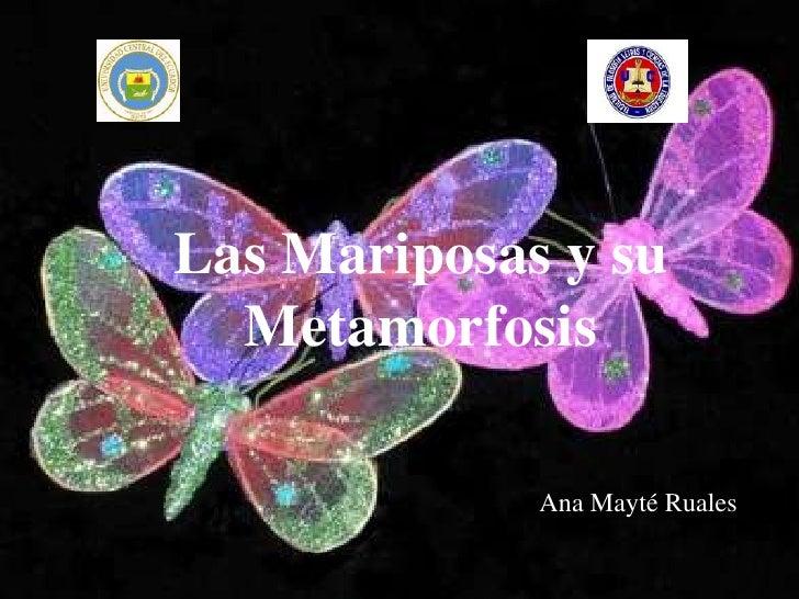 Las Mariposas y su  Metamorfosis             Ana Mayté Ruales