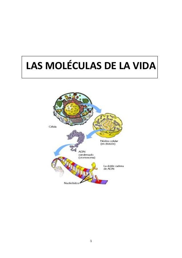 Las moléculas de la vida