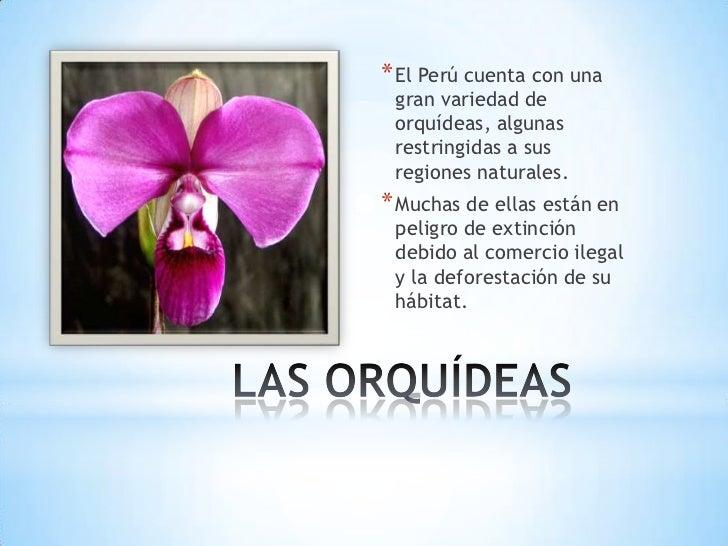 * El Perú cuenta con una gran variedad de orquídeas, algunas restringidas a sus regiones naturales.* Muchas de ellas están...