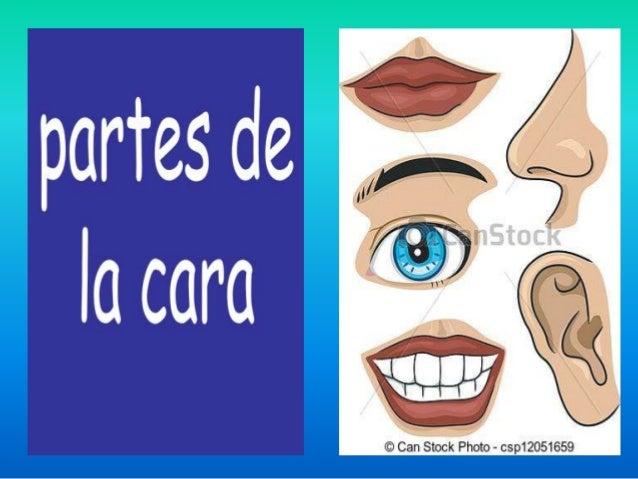 Partes de la cara related keywords suggestions partes - Rodillo para lacar ...