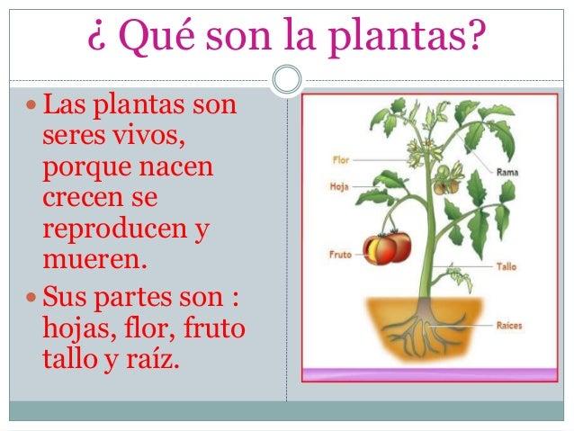 Las partes de la plantas para alumnos de 3 grado de primaria - Cosas sobre las plantas ...