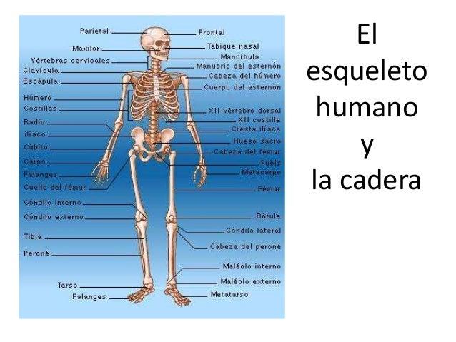 Las parte del cuerpo humanos car interior design for Cuerpo humano interior