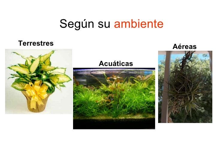 Tipos de plantas terrestres related keywords tipos de - Clases de flores y sus nombres ...