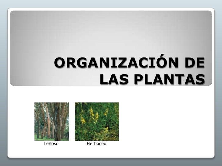 ORGANIZACIÓN DE LAS PLANTAS<br />