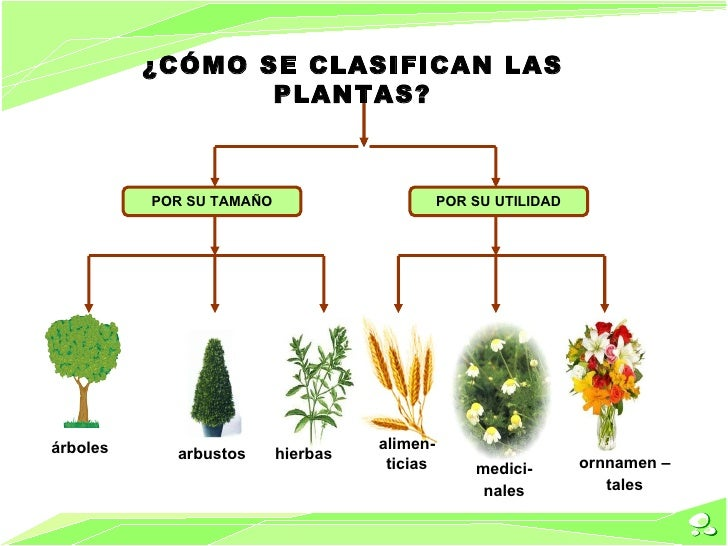 revoluci n verde c mo se clasifican las plantas