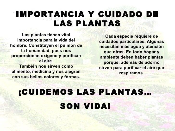 Las plantas - Plantas de navidad cuidados ...