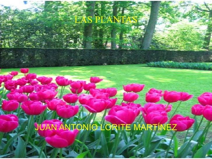 LAS PLANTAS JUAN ANTONIO LORITE MARTÍNEZ