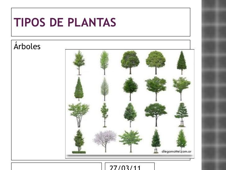 Las plantas - Plantas de interior tipos ...