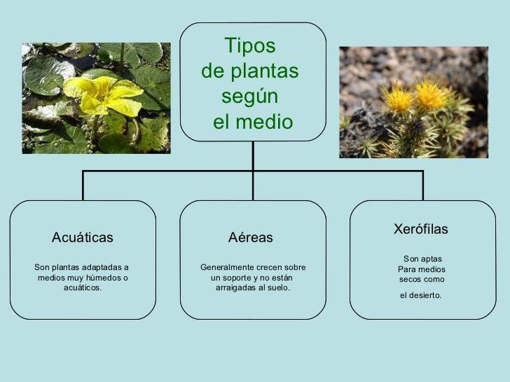tipos de plantas según el medio acuáticas son plantas adaptadas