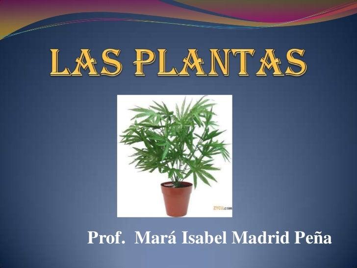 Prof. Mará Isabel Madrid Peña