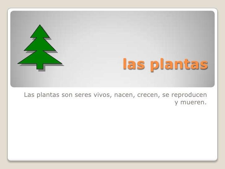 las plantasLas plantas son seres vivos, nacen, crecen, se reproducen                                                y muer...