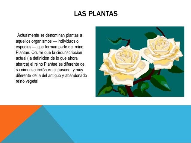LAS PLANTAS Actualmente se denominan plantas aaquellos organismos — individuos oespecies — que forman parte del reinoPlant...