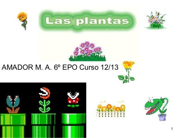 AMADOR M. A. 6º EPO Curso 12/13                                  1