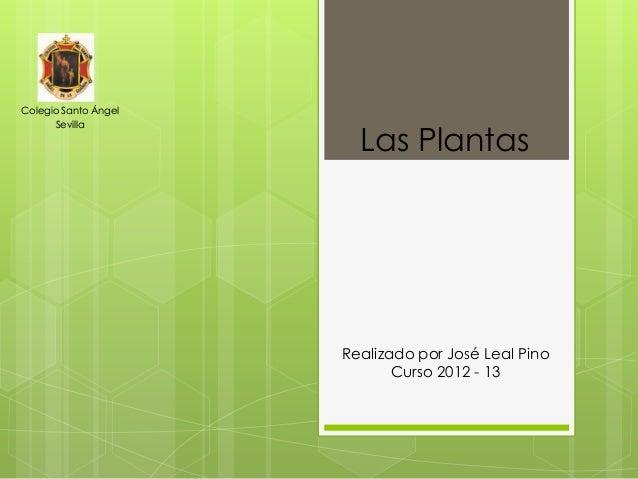 Colegio Santo Ángel      Sevilla                        Las Plantas                      Realizado por José Leal Pino     ...